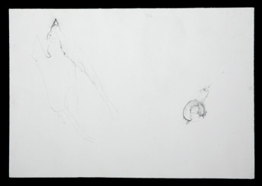 acetabulum varia detail